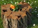 Blumentopf-Stamm